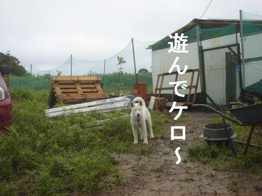 雨なんて.JPG