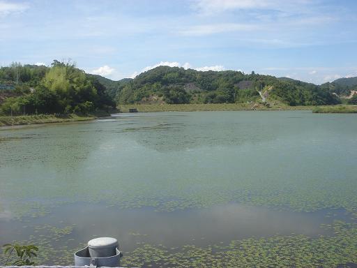 近所の溜め池.JPG