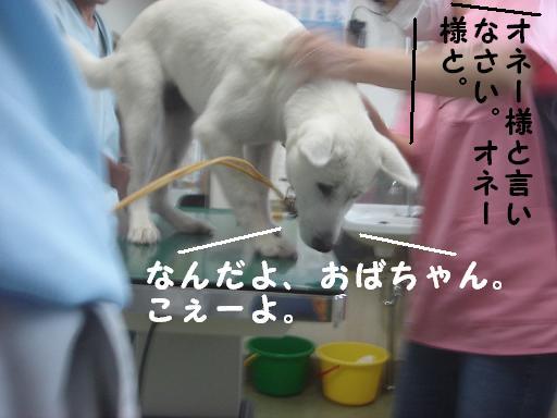 動物病院.JPG