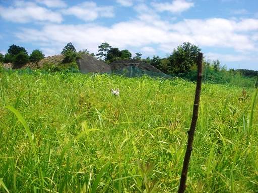牧草畑.JPG