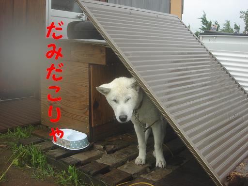 雨いや~.JPG
