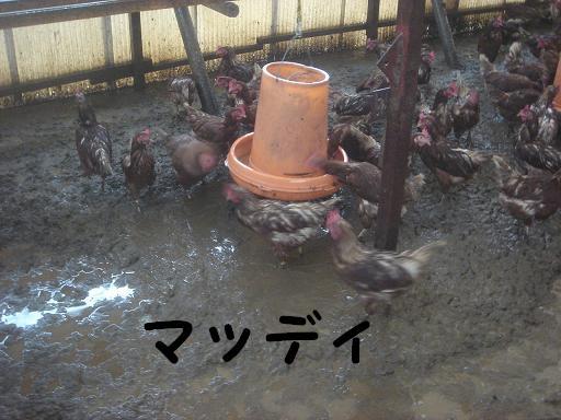 鶏舎が.JPG