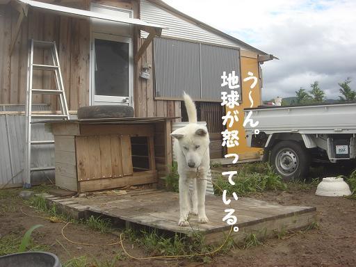 台風一過の朝.JPG