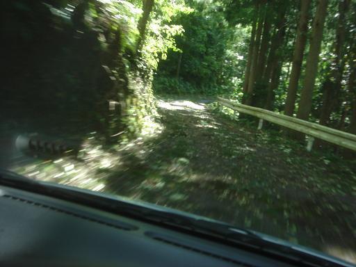 道路に木が.JPG
