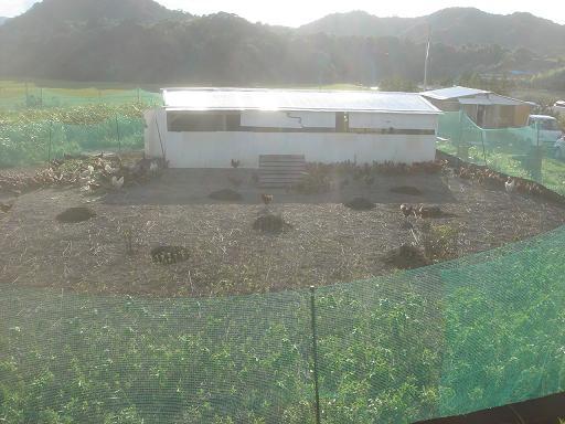 鶏糞の山.JPG