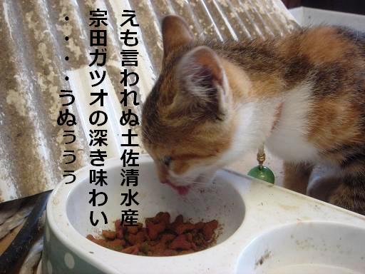宗田カツオ粉に.JPG