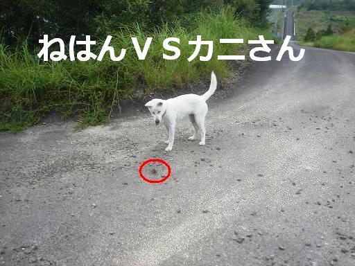 ねはんVSカニ.JPG