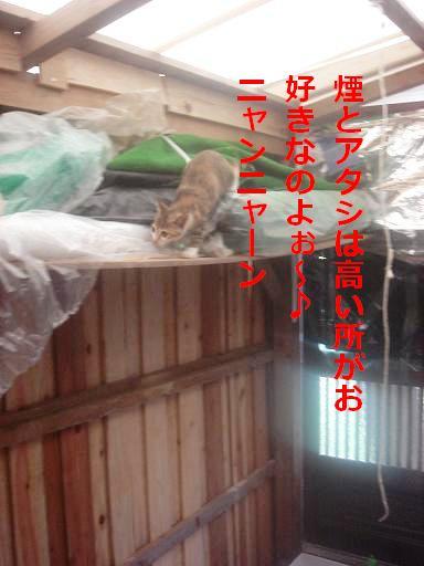 飼料庫の棚の上.JPG