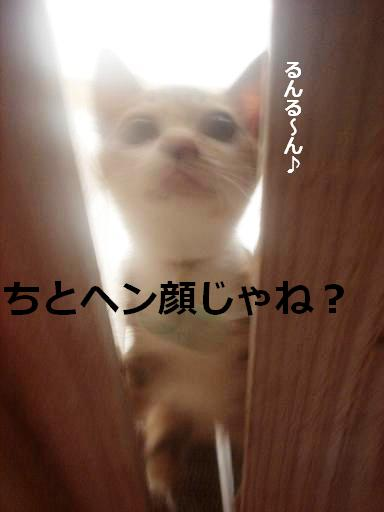 お散歩中.JPG