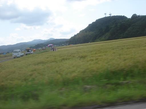 稲刈り真っ盛り.JPG