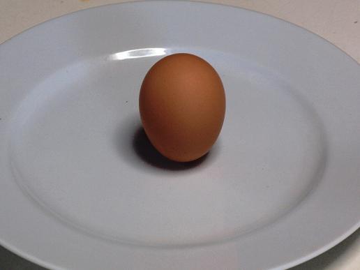 奇跡の卵2.JPG