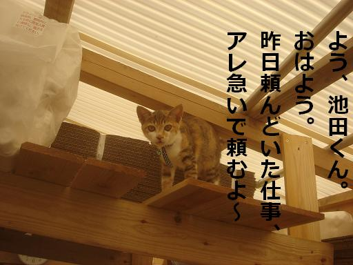 猫田課長.JPG