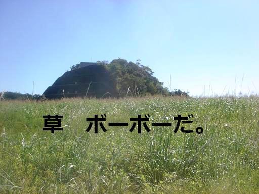 草ボウボウ.JPG