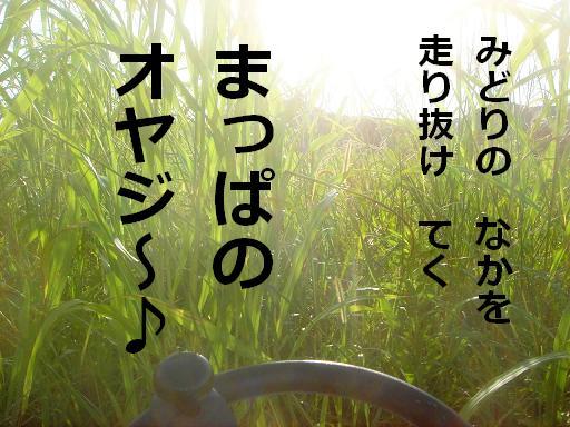 緑の中を.JPG