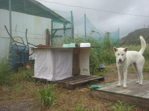 台風対策.JPG