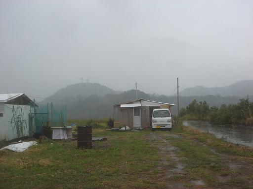 久々の雨.JPG