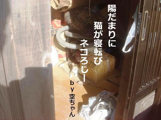 日向ぼっこ.JPG