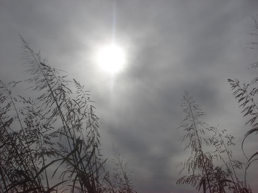 一日中曇り.JPG