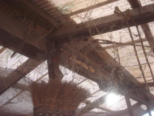 蜘蛛の巣取り.JPG