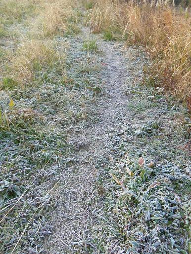 凍った散歩道.JPG