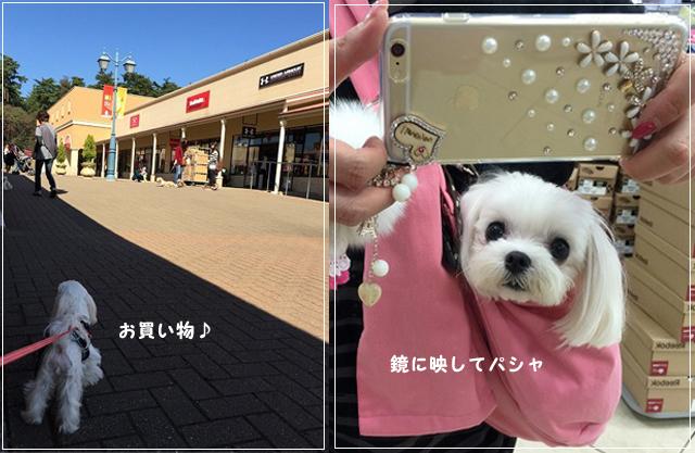 20141018-6810.jpg