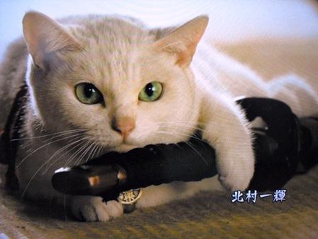 (ΦωΦ)侍4
