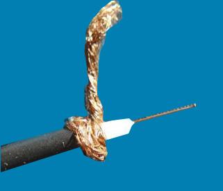 アンテナを守る筋肉組織