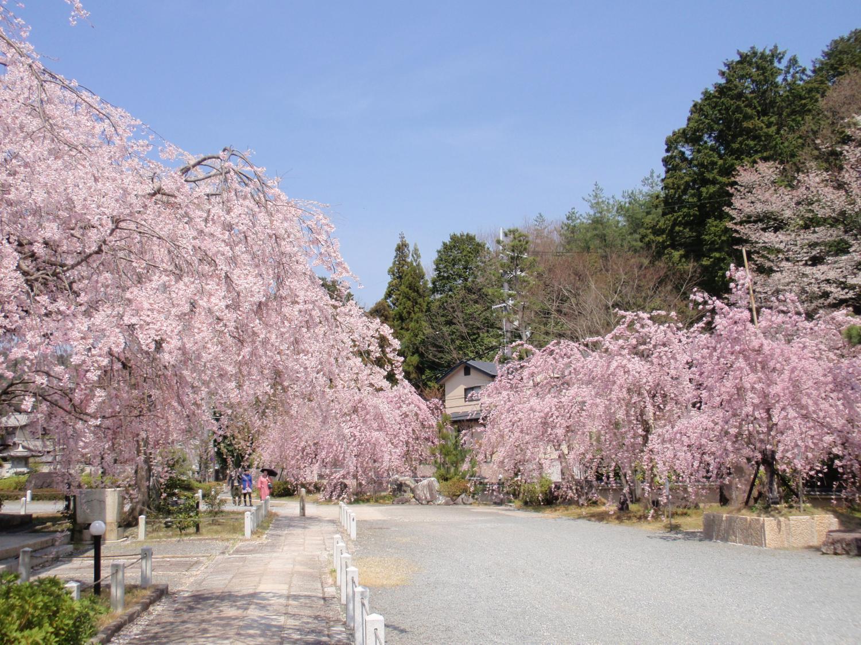 妙満寺・桜園