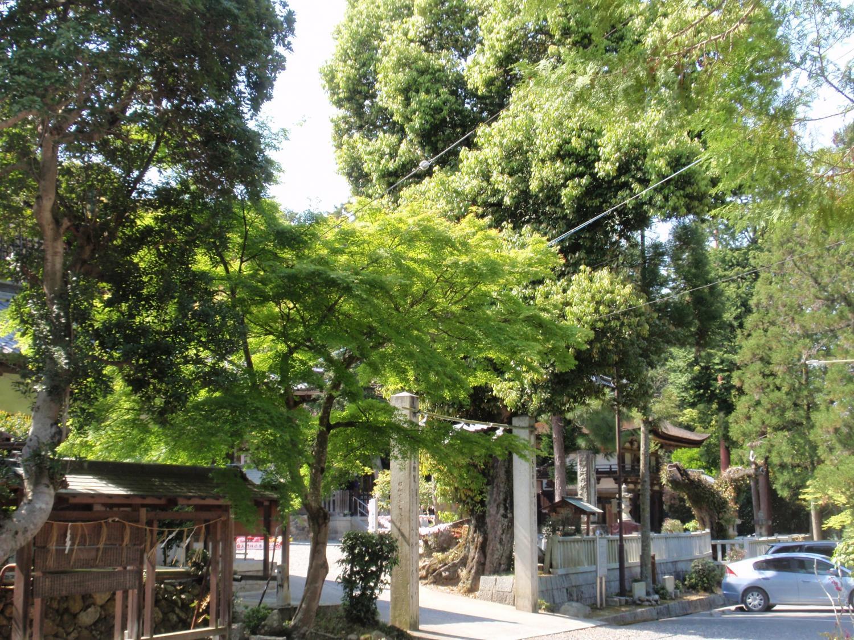 大野神社・境内