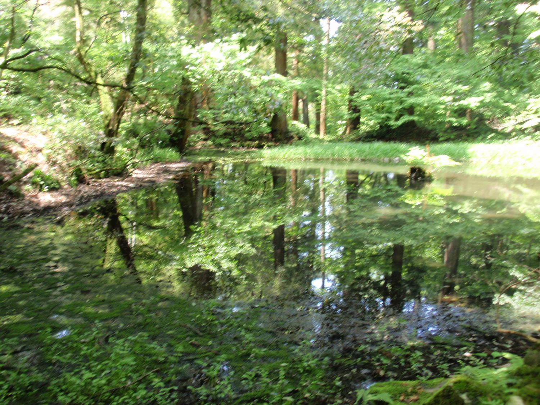 白山神社・御手洗池