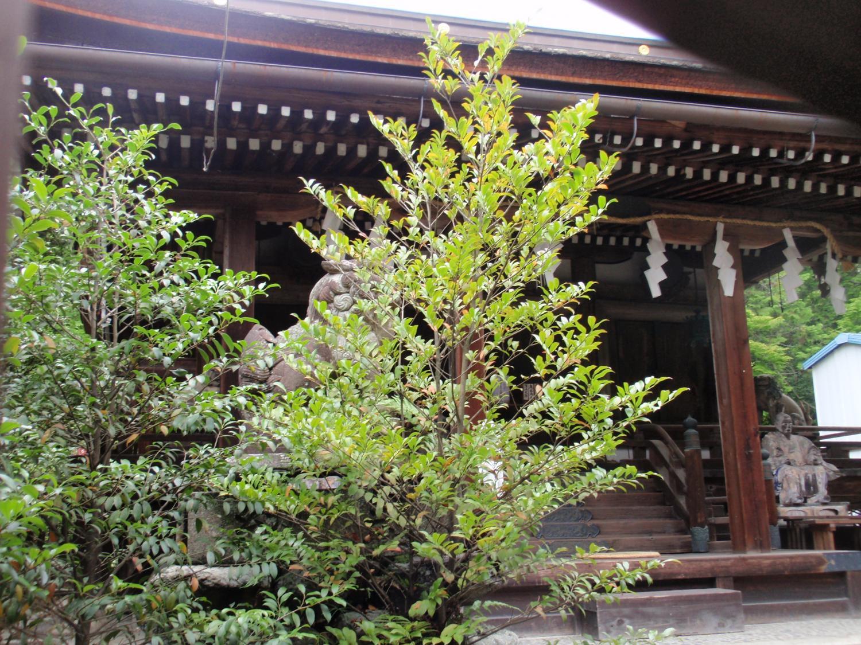 三尾神社・本殿