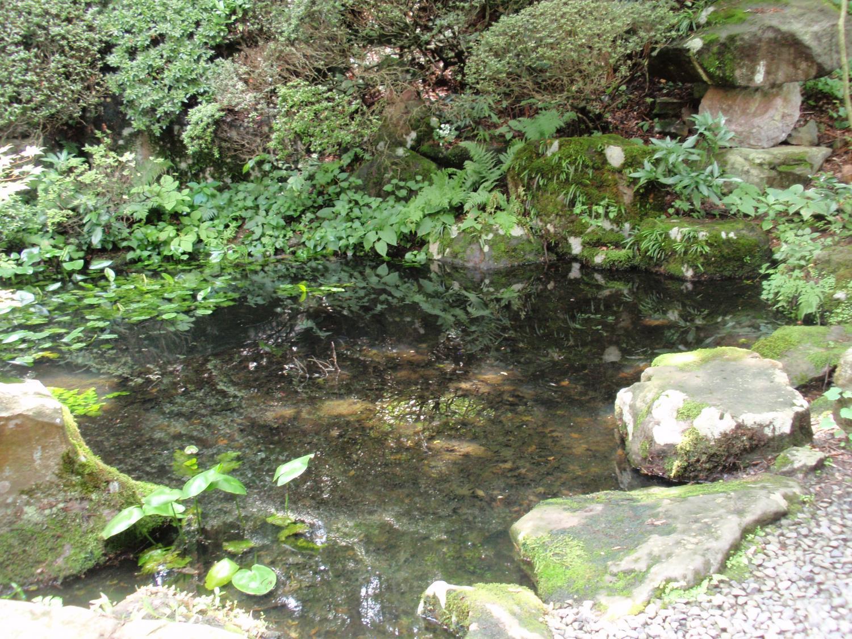 蛙合戦の池