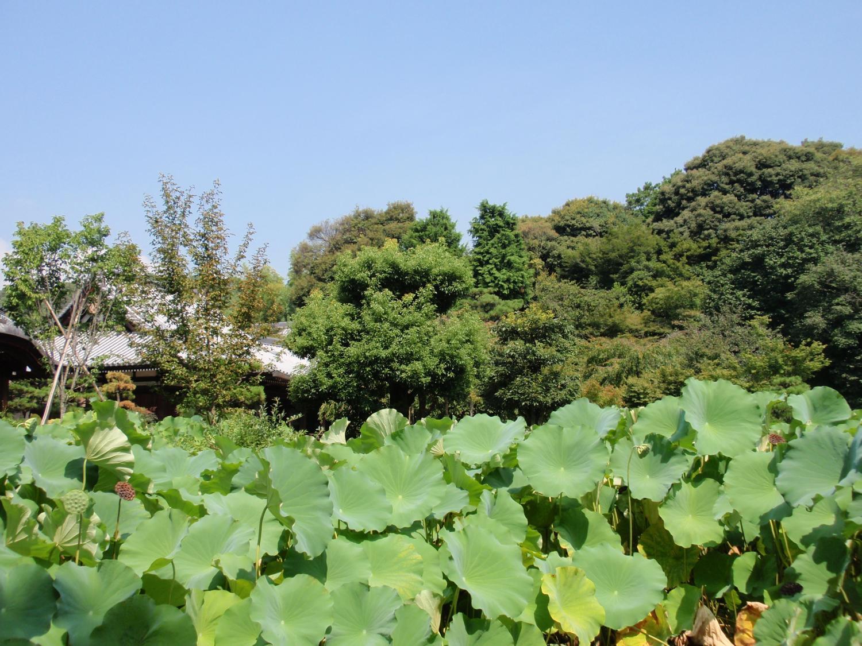 法金剛院・庭園