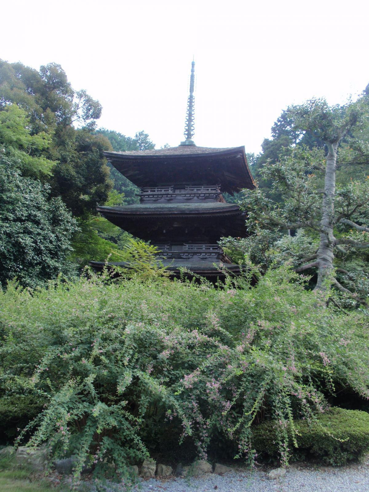 徳源院・三重塔