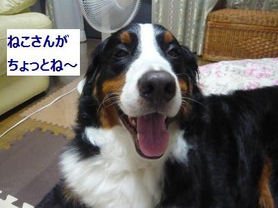 004_convert_20130718224159.jpg