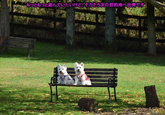 DSC_0115_20141112202123c04.jpg