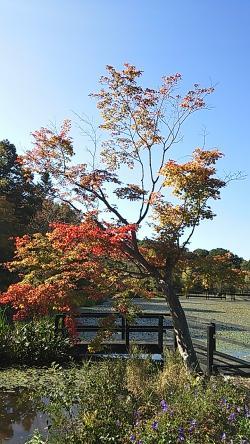 軽井沢②2013.10.14