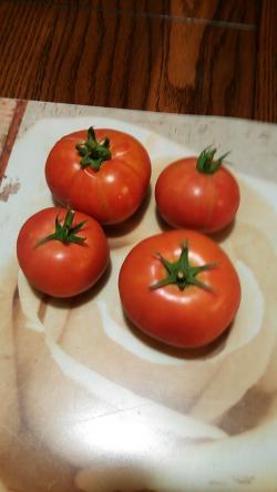 香ちゃんトマト2013.7.19