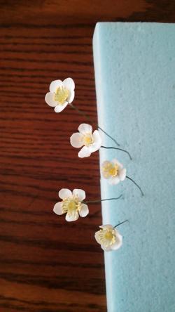 クレイのイチゴの花2013.7.25
