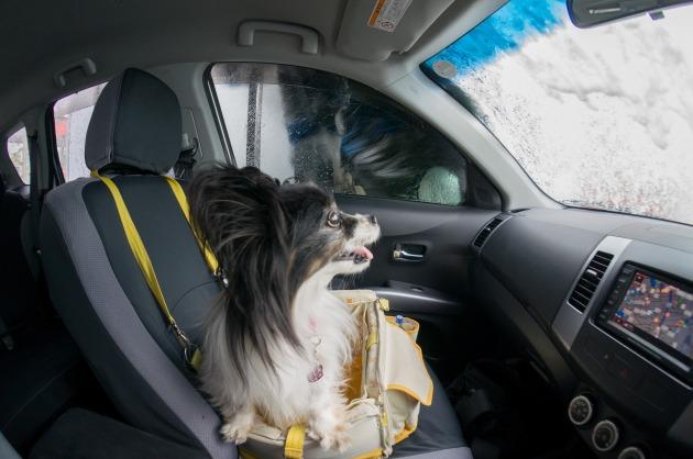 マリィの洗車初体験!-004
