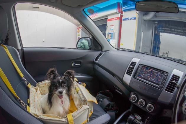マリィの洗車初体験!-006