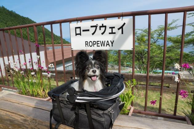 関西避暑地情報♪ ~びわ湖バレイ~-001