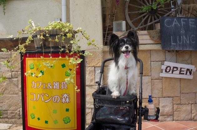 LEVINくん歓迎オフ会♪ 【カフェで鼻デカ写真編】-002