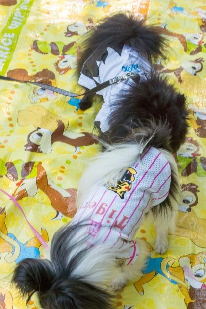 サザオフ2013【熊猫犬日記ファミリー】-006