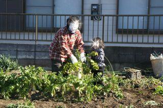 ブログ2 0103野菜 (1)