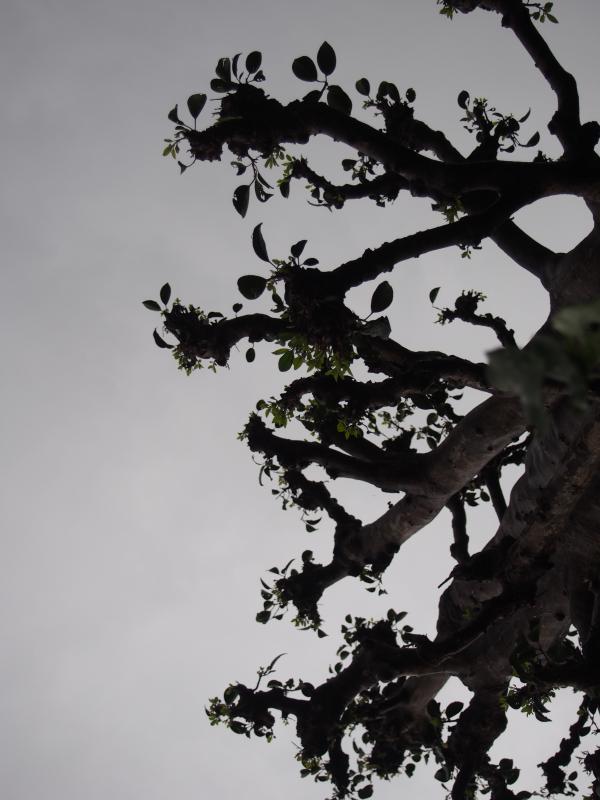 灰色の空と木 さかさ