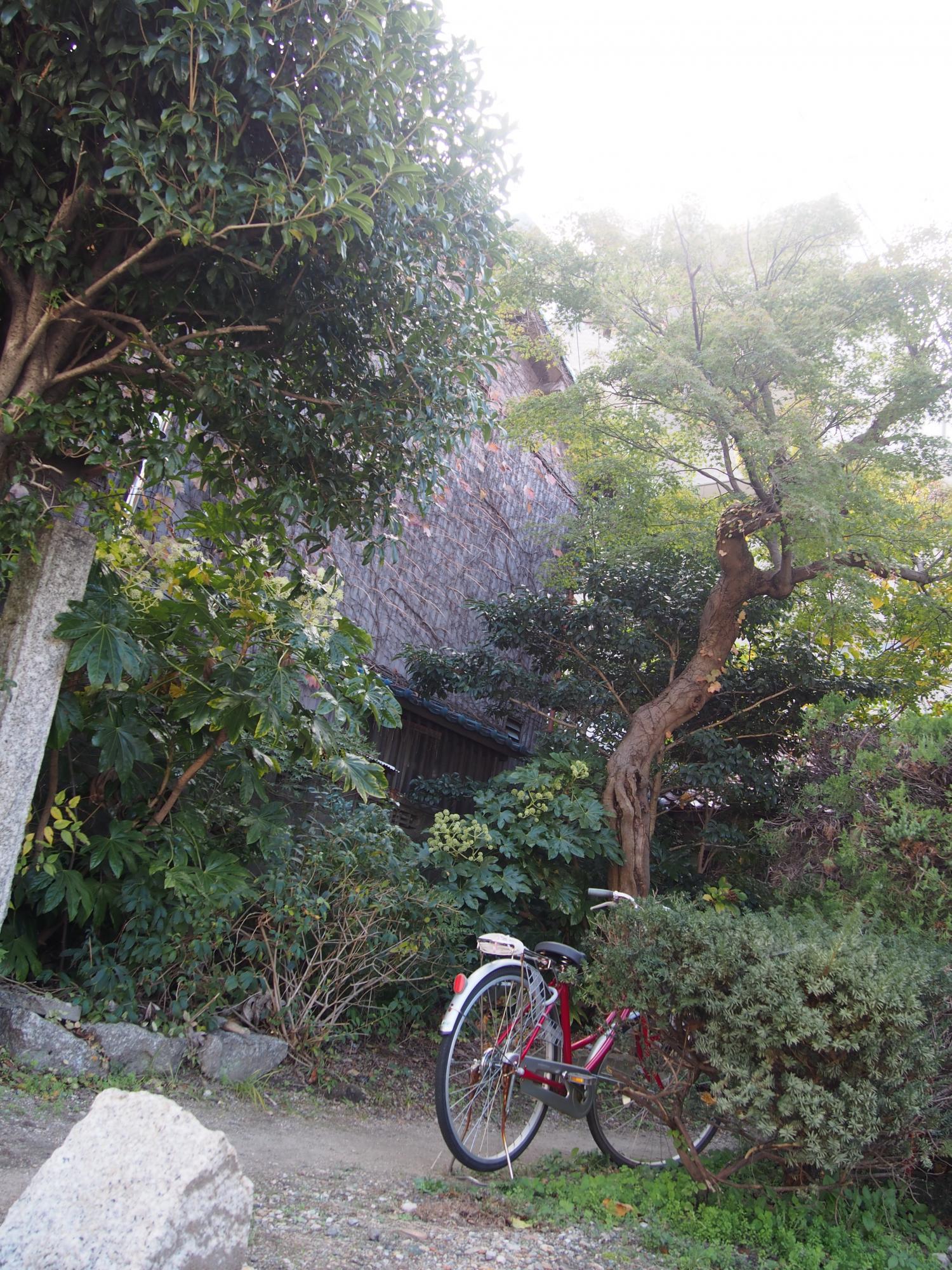 木漏れ日と赤い自転車1