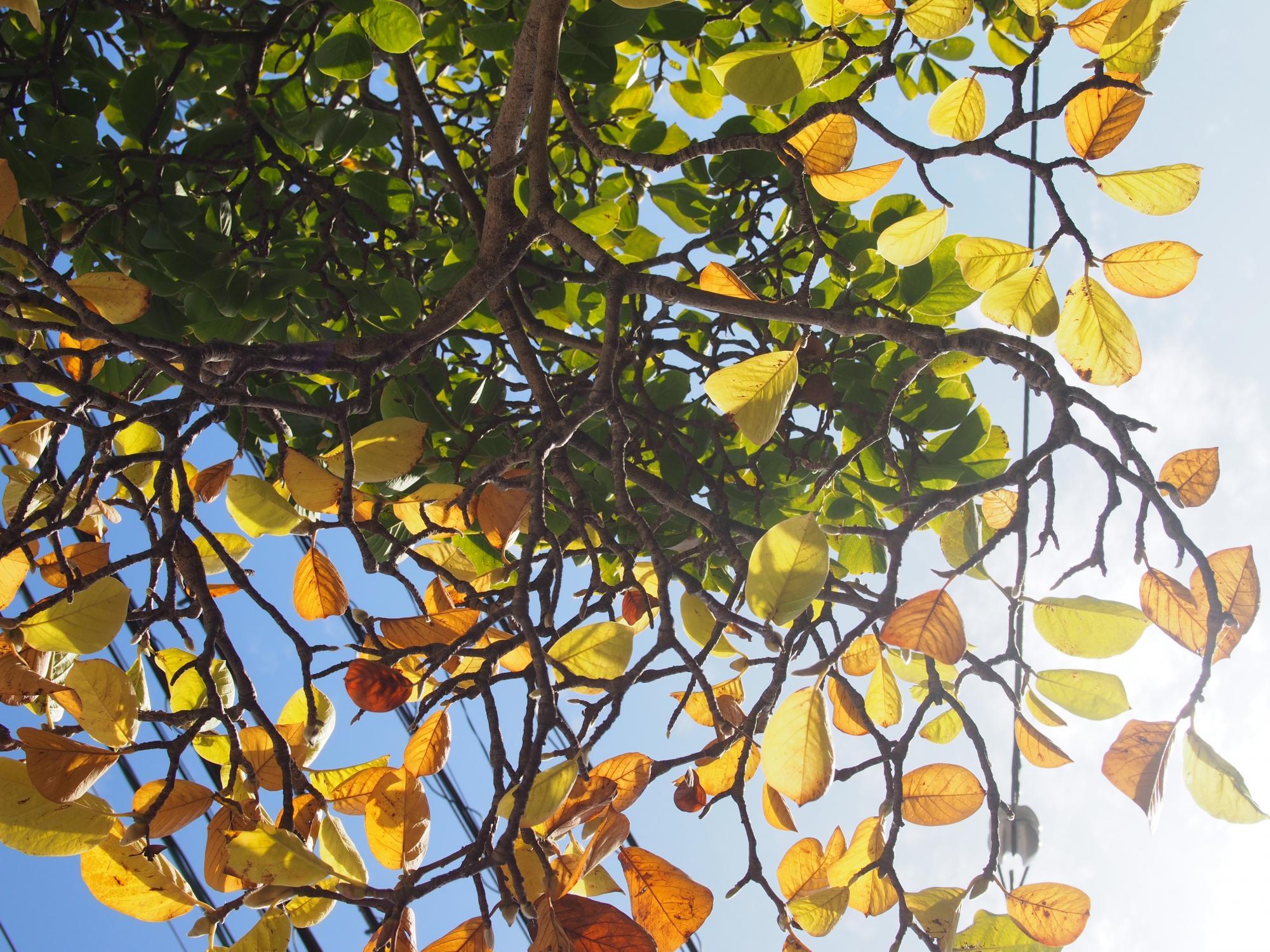 秋はパレット