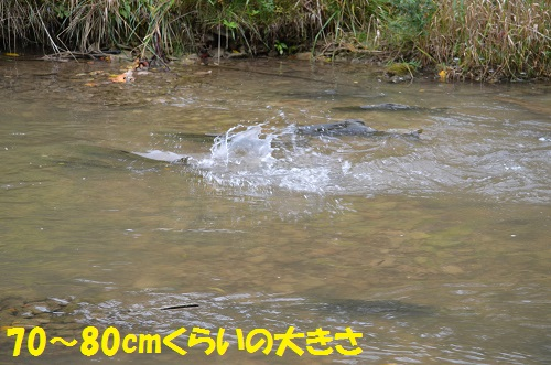 131006_PIC005.jpg