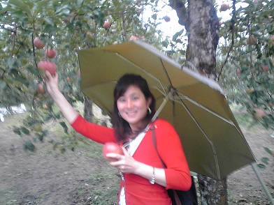 apple picking in the rain